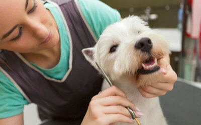 What is included in a dog grooming?