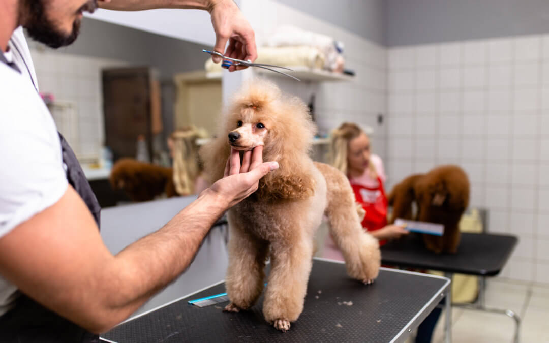 Looking for Pet Grooming Services in Toronto