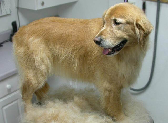 FURminator SHED-LESS TREATMENT
